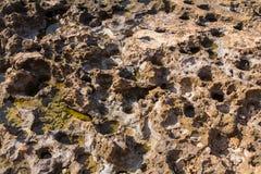 Textur av en riden ut stenkanfas med krater och naturligt salt naturligt Arkivfoton