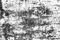 Textur av en rostig dörr Arkivfoton
