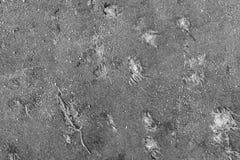 Textur av en smutsig trasagrå färgfärg Royaltyfria Foton