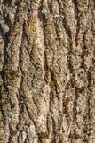 Textur av ett gammalt skäll av ett träd som täckas delvist med mossa, abstrakt bakgrund Arkivfoton