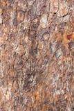 Textur av ett gammalt skäll av ett träd som täckas delvist med mossa, abstrakt bakgrund Arkivfoto