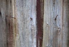 Textur av ett gammalt träd Royaltyfri Foto