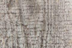 Textur av ett gammalt urblekt och ridit ut grovt trä Arkivbild