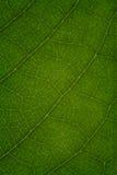 Textur av ett grönt blad som bakgrund arkivbilder