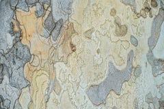 Textur av ett träd i parkera IOR Arkivbilder