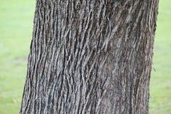 Textur av ett trädskäll i en trädgård, Dubai Arkivbilder