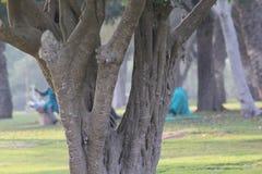 Textur av ett trädskäll i en trädgård, Dubai Royaltyfri Fotografi