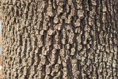 Textur av ett trädskäll på en solig dag Royaltyfri Foto