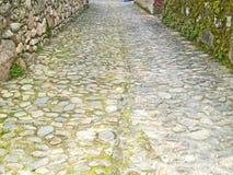 Textur av ett trottoargolv med mossa Fotografering för Bildbyråer