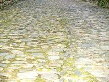 Textur av ett trottoargolv med mossa Arkivbilder