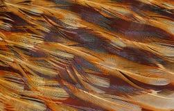 Textur av fågelfjädrar Royaltyfria Bilder