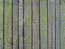 Textur av gamla grå färger gör grön väggen av vertikala träbräden arkivbilder