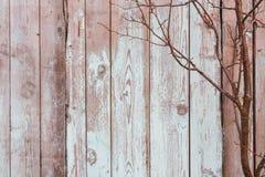 Textur av gamla gråa bräden och filialer royaltyfria bilder