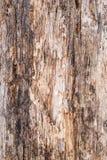 Textur av gammalt skiktat och ruttet trä, abstrakt bakgrund Royaltyfria Foton