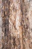 Textur av gammalt skiktat och ruttet trä, abstrakt bakgrund Arkivfoton