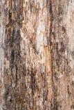 Textur av gammalt skiktat och ruttet trä, abstrakt bakgrund Royaltyfria Bilder