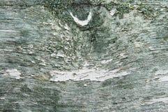 Textur av gammalt skällträ Arkivbild
