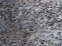 Textur av gammalt trä Arkivfoton