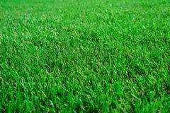 Textur av grönt barngräs på en solig dag, renhet av naturen Royaltyfri Foto