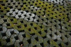Textur av Gray Stone Pavement med grön mossa Arkivbild