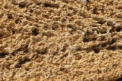 Textur av grova tegelstenar som göras av skaldjur Arkivfoton