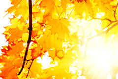 Textur av guling lämnar Autumn Leaf Background Royaltyfri Fotografi