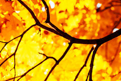 Textur av guling lämnar Autumn Leaf Background Royaltyfri Foto