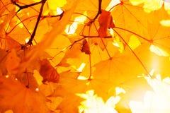 Textur av guling lämnar Autumn Leaf Background Royaltyfria Foton