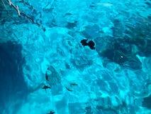 Textur av härligt blått hav-genomskinligt genomskinligt vått, regnbågsskimrande glödande salt vatten, hav, hav, bakgrunden av hav Arkivbild