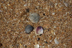 Textur av havet Royaltyfria Foton