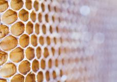Textur av honungskakan Royaltyfri Fotografi