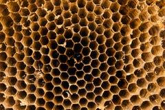 Textur av honungskakan Naturlig bakgrund Arkivfoton