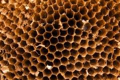 Textur av honungskakan Naturlig bakgrund Royaltyfria Foton