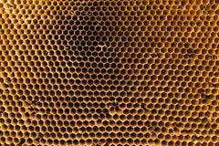 Textur av honungskakan Naturlig bakgrund Arkivfoto