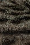 Textur av katts päls royaltyfri bild