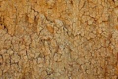 Textur av lerasandväggen av gul färg med massor av sprickor av olikt djup arkivfoton