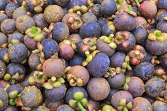 Textur av mangosteenen Royaltyfria Bilder