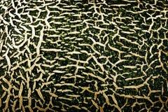 textur av melon Royaltyfri Bild