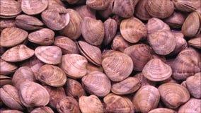 Textur av musslor stock video