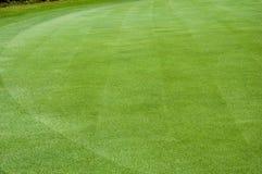 Textur av mycket fint gräs på gräsplan royaltyfri bild