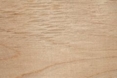 Textur av naturlig björkkryssfaner, yttersidan av trät har gnidits med sandpapper och har skrapats Arkivbild