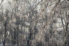 Textur av naturligt snö och ris Royaltyfria Bilder