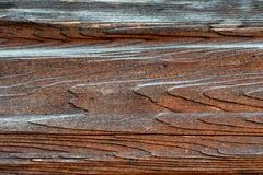 Textur av naturligt trä som målas med målarfärg arkivfoto