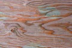 Textur av naturligt trä som målas med målarfärg royaltyfri foto