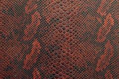 Textur av ormhud i svart och röd skugga Arkivfoton