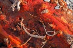 Textur av rött trä och kiselstenar på stranden Royaltyfri Fotografi