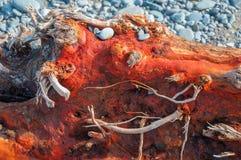 Textur av rött trä och kiselstenar på stranden Arkivbilder