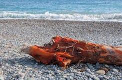 Textur av rött trä och kiselstenar på stranden Royaltyfria Bilder