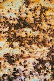 Textur av rostigt järn, sprucken målarfärg på en gammal metallisk yttersida, Royaltyfria Bilder