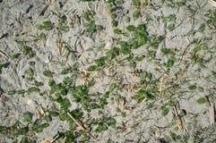 Textur av Sandy Lake Shore med gr?s royaltyfri foto